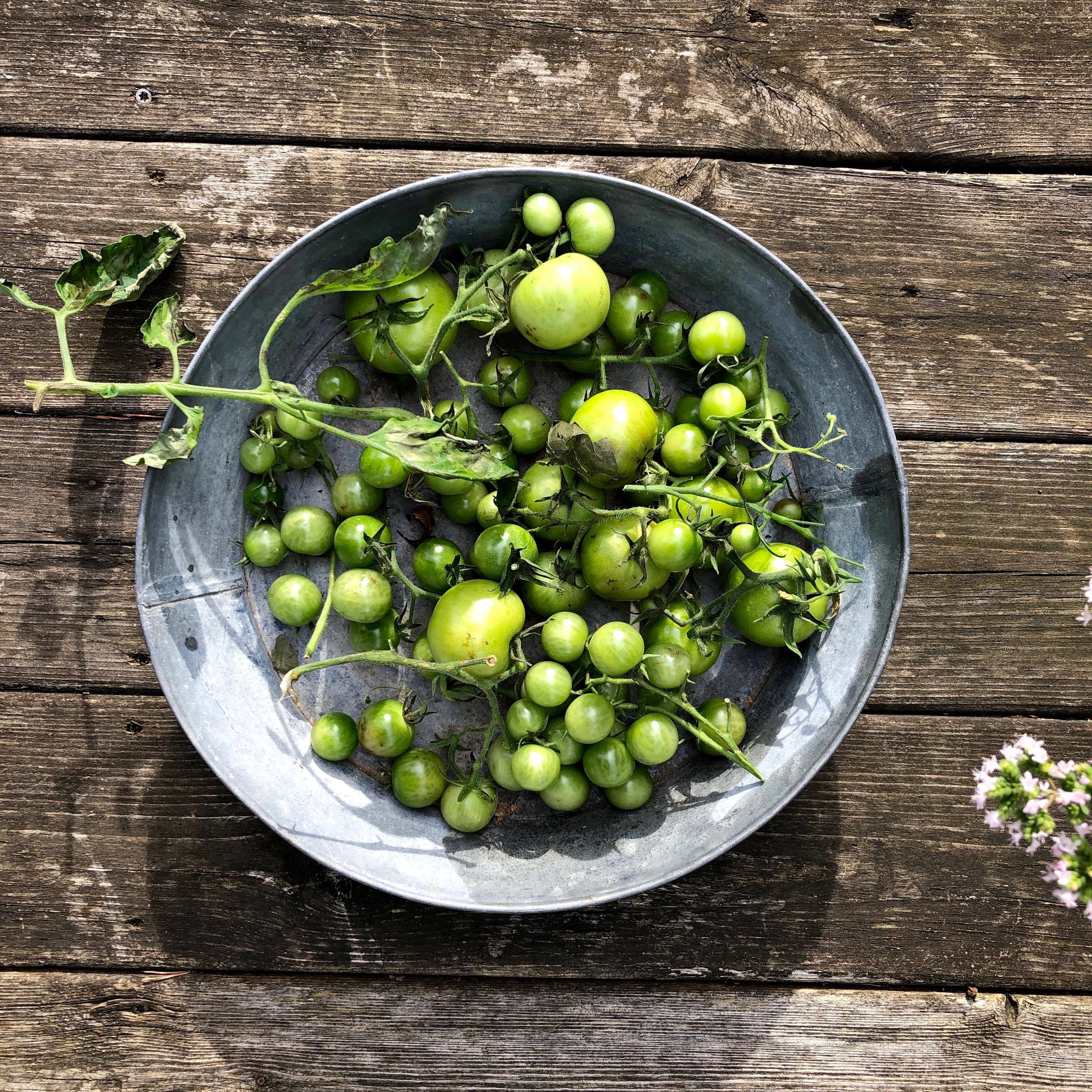 Gröna tomater – förvaring & mognad